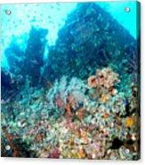 Coral Pyramid Acrylic Print