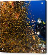 Coral Reef And Diver  Acrylic Print
