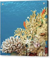 Coral Reef Eco System Acrylic Print