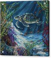 Coral Reef Turtle Acrylic Print