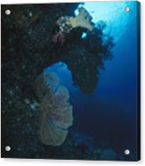 Coral Reef Wall With Seafan And Hard Acrylic Print