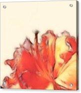 Coral Rhododendron Acrylic Print by Lynn Bolt