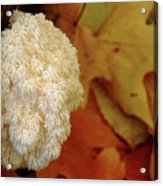 Coral Tooth Acrylic Print
