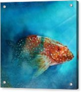 Coral Trout Acrylic Print