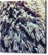 Coral  Acrylic Print