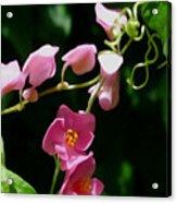 Coral Vine Flower Acrylic Print
