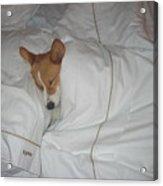 Corgi Sleeping Softly Acrylic Print