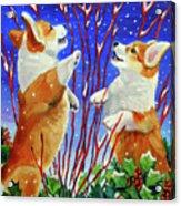 Corgi Snow Puppies Acrylic Print