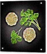 Coriander And Garlic Still Life. Acrylic Print