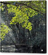 Corkscrew Swamp - In The Autumn Acrylic Print