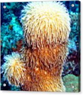 Corky Sea Finger Coral - The Muppet Of The Deep Acrylic Print
