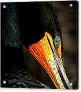 Cormorant Acrylic Print