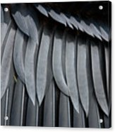 Cormorant Wing Feathers Abstract Acrylic Print