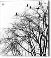 Cormorants Acrylic Print