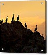 Cormorants On A Rock With Golden Sunset Sky Acrylic Print