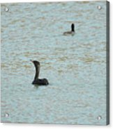 Cormorants On The Lake Acrylic Print