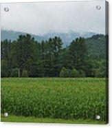 Corn Among The Mountains Acrylic Print