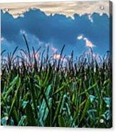 Corn And Clouds Panorama Acrylic Print