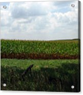 Corn And Clouds Acrylic Print