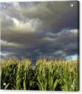 Corn Field Beform Storm Acrylic Print
