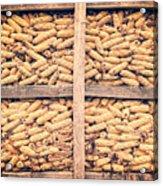 Corn For Winter Acrylic Print