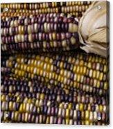 Corn Kernals Acrylic Print