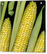 Corn On The Cob I  Acrylic Print
