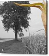 Corn Tree Acrylic Print