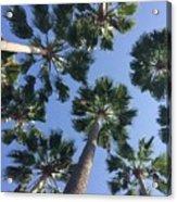 Corner Palms Acrylic Print