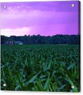 Cornfield Landscapes Purple Rain Acrylic Print
