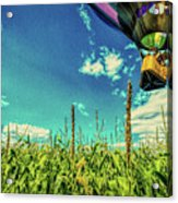 Cornfield View Hot Air Balloons Acrylic Print by Bob Orsillo