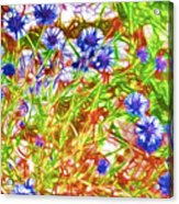 Cornfield With Cornflowers Acrylic Print