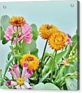 Cornflowers 20 Acrylic Print