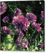 Cornflowers Autumngraphy - Photopainting Light Acrylic Print