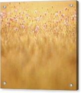Cornflowers Acrylic Print