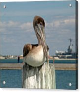 Corpus Christi Pelican Acrylic Print