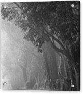 Corridor Of Mist Acrylic Print