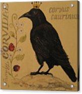 Corvus Caurinus Acrylic Print