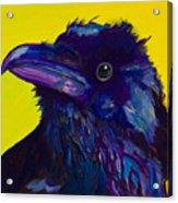 Corvus Acrylic Print