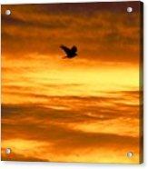 Corvus Silhouette  Acrylic Print