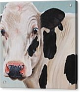 Cosmoo Cow Acrylic Print by Laura Carey