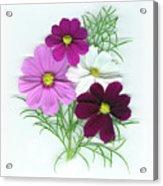 Cosmos Bouquet Acrylic Print