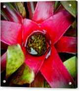 Costa Rica Flower Acrylic Print