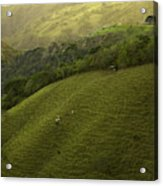 Costa Rica Pasture Acrylic Print