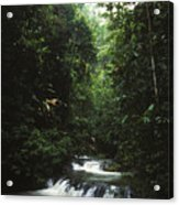 Costa Rica Waterfall In The Carocavado Acrylic Print by James Forte