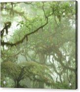 Costa Rican Cloud Forest Acrylic Print by Matt Tilghman