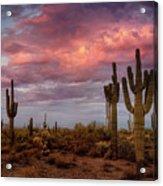 Cotton Candy Pink Sonoran Sunrise  Acrylic Print