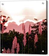 Cotton Candy Sunset 4 Acrylic Print