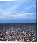 Cotton Fields At Dusk Casa Grande Arizona 2004 Acrylic Print