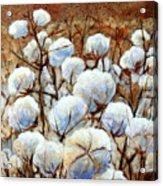 Cotton Fields Acrylic Print